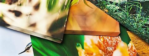 печать фото на холсте в Брянске